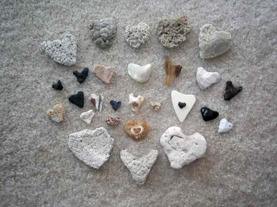 temporary art heart shells by Rebecca E. Parsons