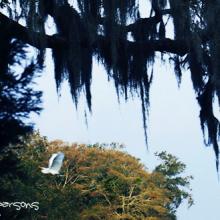 egret flying under spanish moss