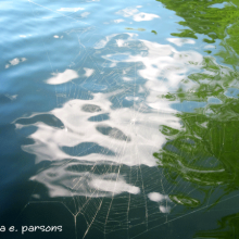 spider-web-water