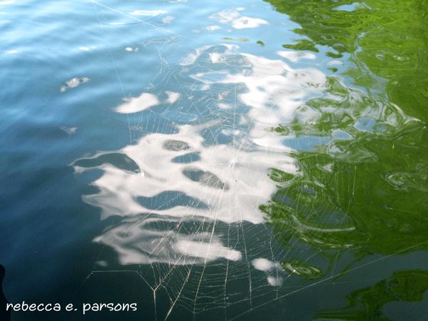 spider-web-water