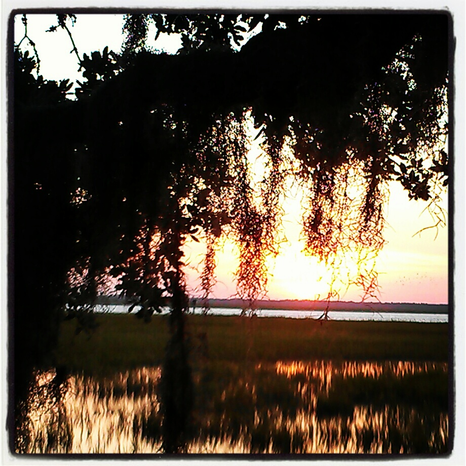 spanish moss over marsh Rebecca E. Parsons photography