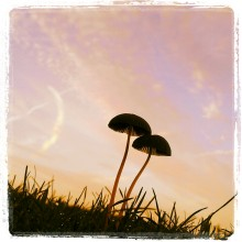 Tiny Mushrooms at dawn Sunday Inspiration Image #58 photography by Rebecca E. Parsons