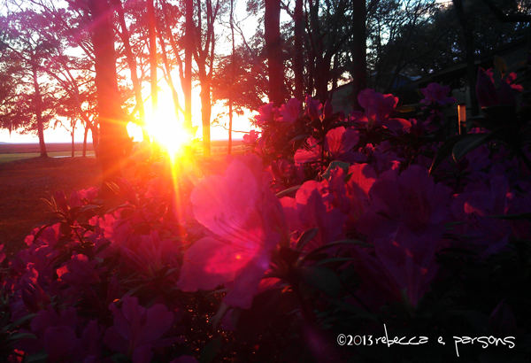 Azeleas at Sunset on Amelia Island photography by Rebecca E. Parsons