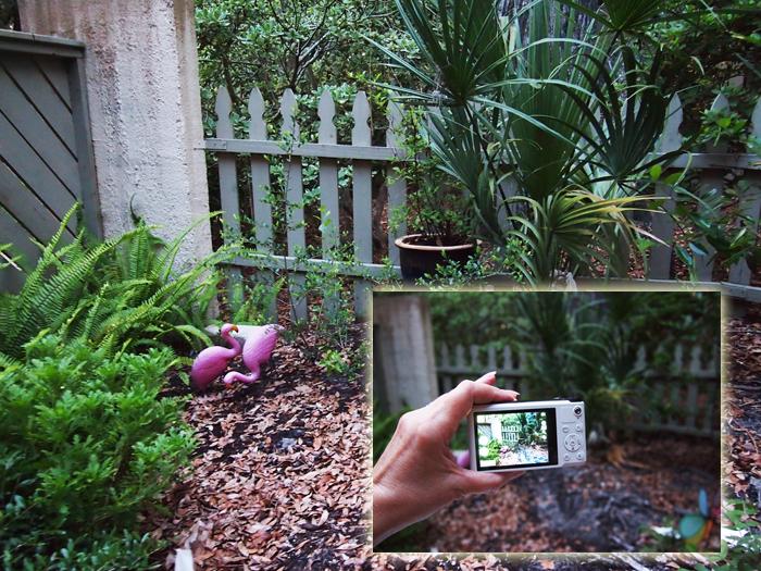 Taking a photo Samsung WB200 camera #SocialCamera