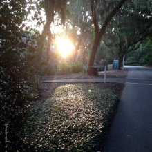 early-morning-walk-with-chance
