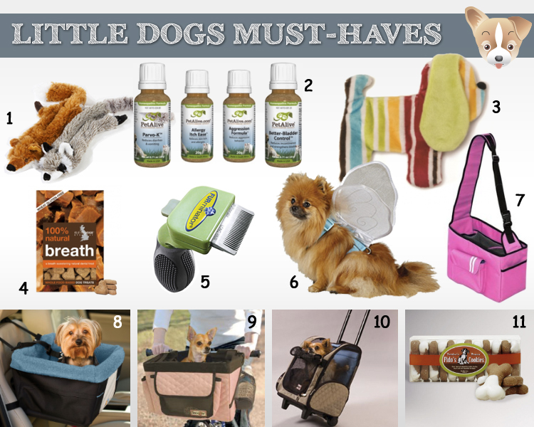 little dog must haves