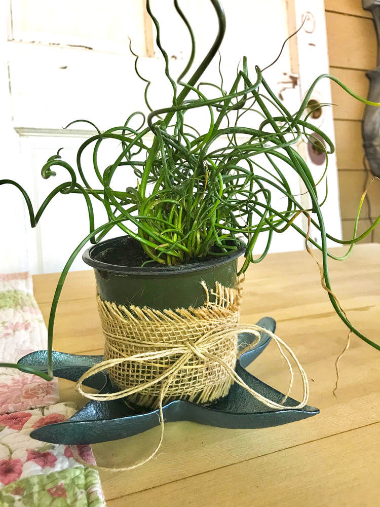 curly garden plant in burlap wrapper