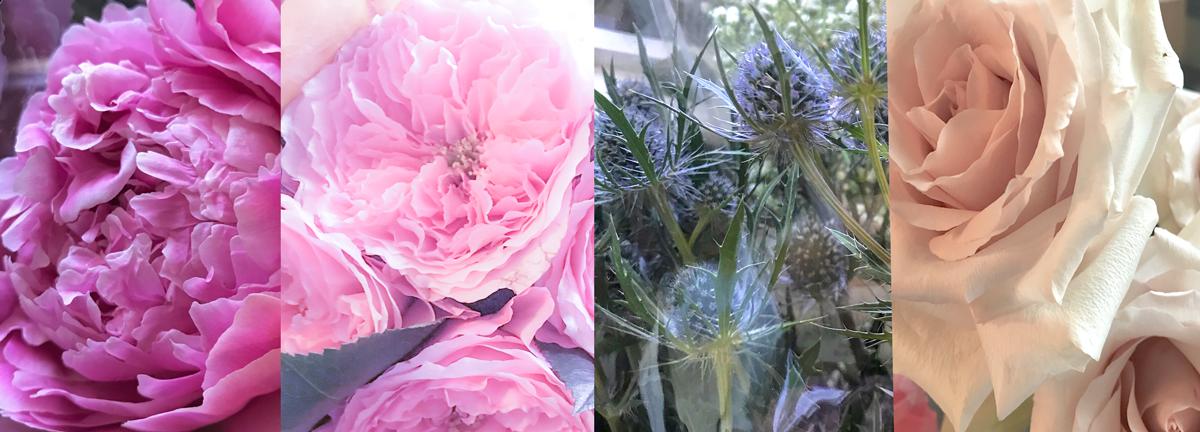 peonies, pink roses, thistles, pale roses