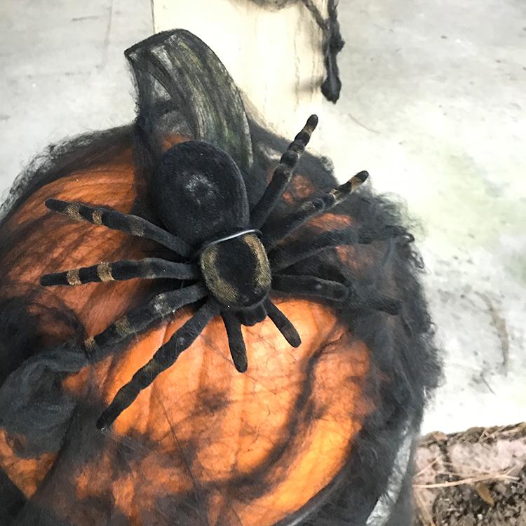 large pumpkin spider